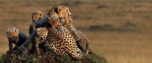 african cats stills